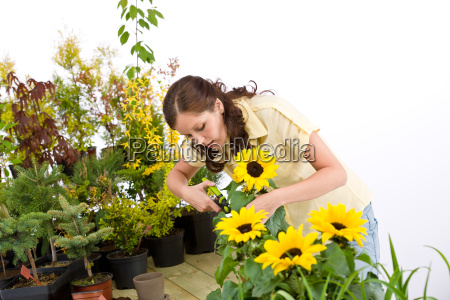 gardening, -, woman, cutting, sunflowers, and - 3126309