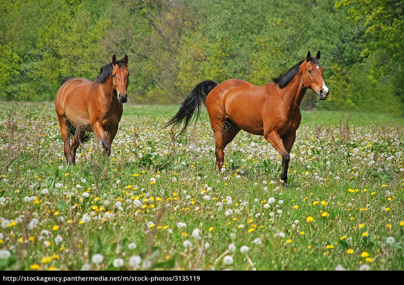 two, horses, in, a, paddock - 3135119