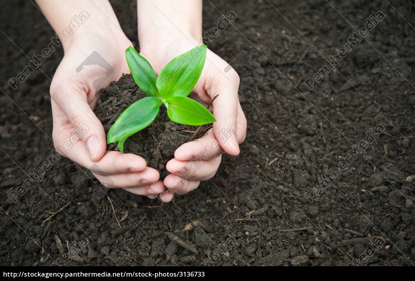 compost - 3136733