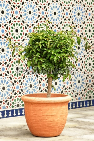 container plant