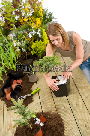 gardening, -, woman, with, bonsai, tree - 3146291