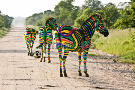 south, african, zebra, foolball - 3150909