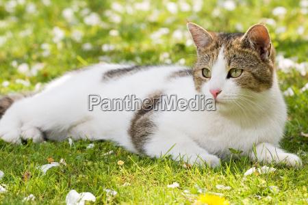 cat is in the garden