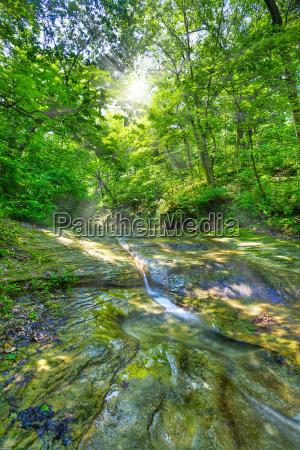 environment, enviroment, spring, sunshine, creek, forest - 3161785