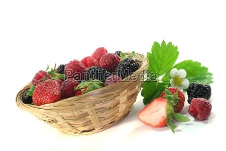 leaf bloom blossom flourish flourishing berries