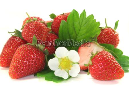 leaf vitamins vitamines bloom blossom flourish