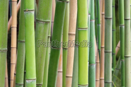 bamboo, -, bamboo, 39 - 3180989