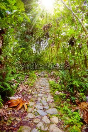 footpath, in, the, jungle - 3184775