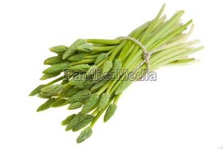 bunch of wild asparagus green