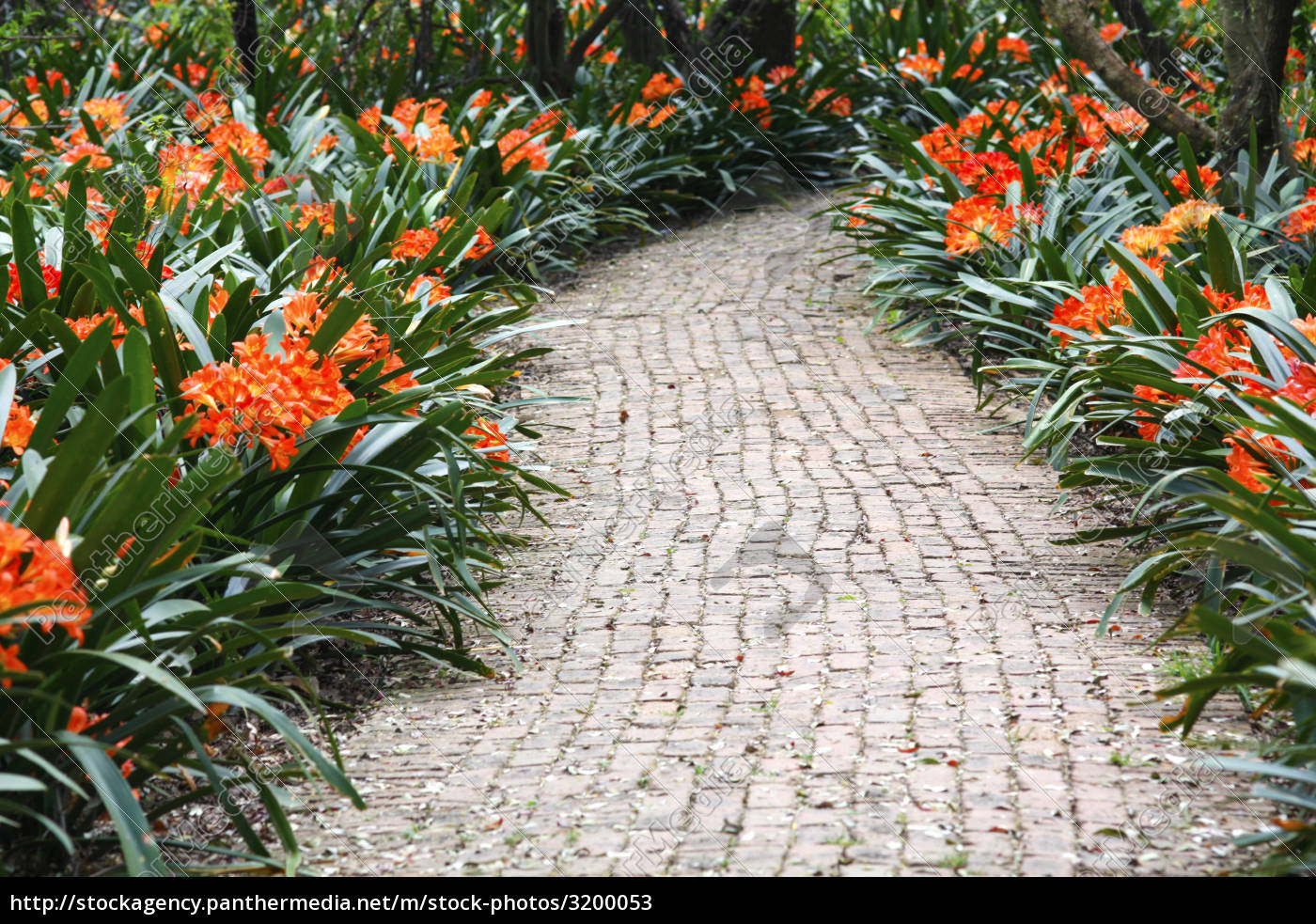 colourful, pathway - 3200053