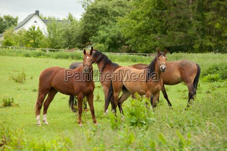 horses - 3202575