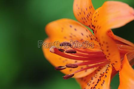 blossom, 1 - 3214001