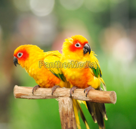a, colourful, parrots - 3227949
