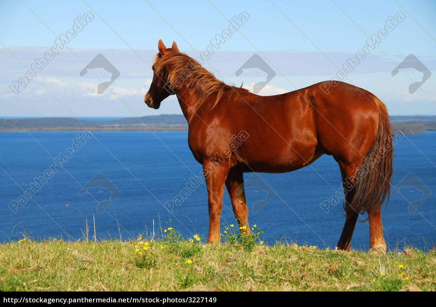 stallion, with, lake, view - 3227149