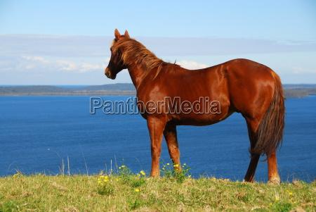 stallion, with, lake, view - 3227149