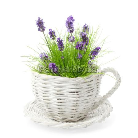 lavender, amongst, grass, - 3232505
