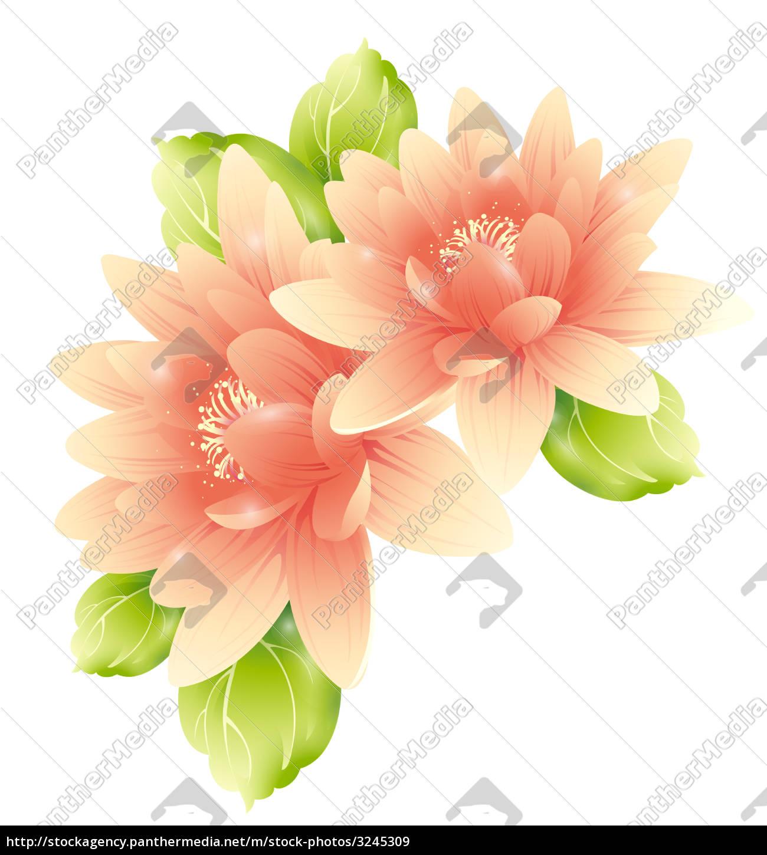 pink, flower - 3245309