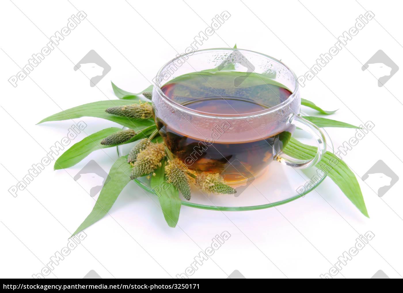 tea, herb tea, spitzwegerichtee, spitzwegerich, hustentee, plantago - 3250171