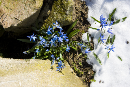 stone, winter, flower, plant, snow, coke - 3251505