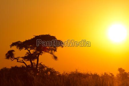 afikanischer, sunrise - 3254733