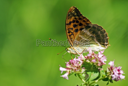 insect flower plant insects brown brownish