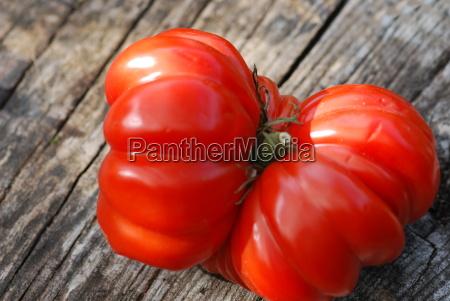 heirloom tomato solanum lycopersicum