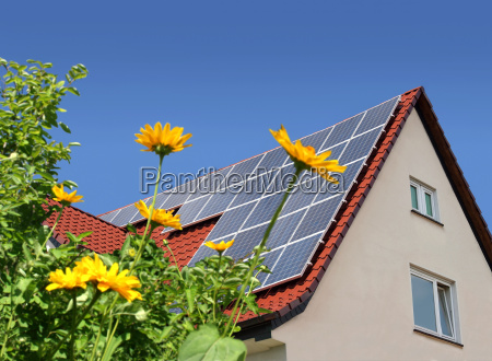 solar panels on roof behind flowers