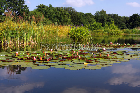 plant fresh water pond water water