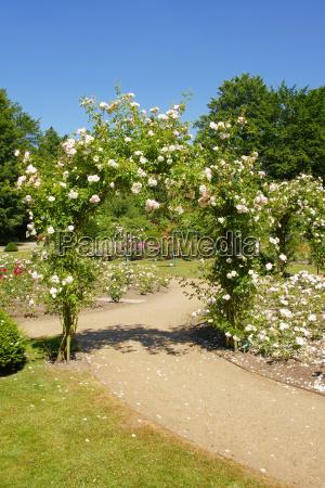 parque jardim flor flores planta rosas