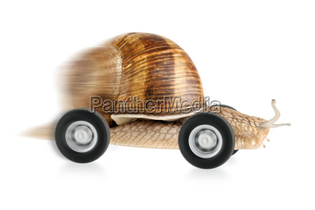 whizzing snail on wheels