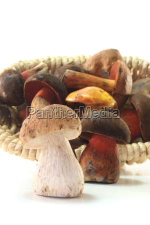 food aliment vegetable mushrooms picked forest