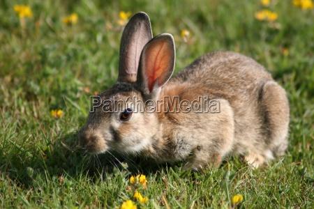 wild rabbits up close
