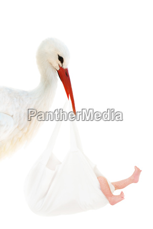 stork with baby in white bag