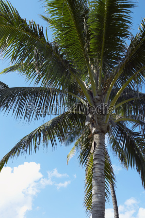 low angle view of a palm