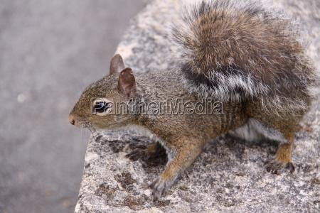 squirrel in closeup