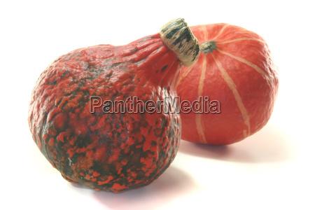 orange food aliment fruit halloween pumpkin