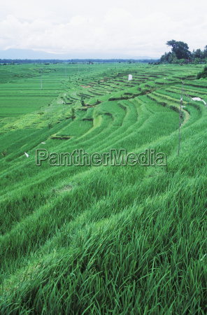 panoramic view of a terraced field
