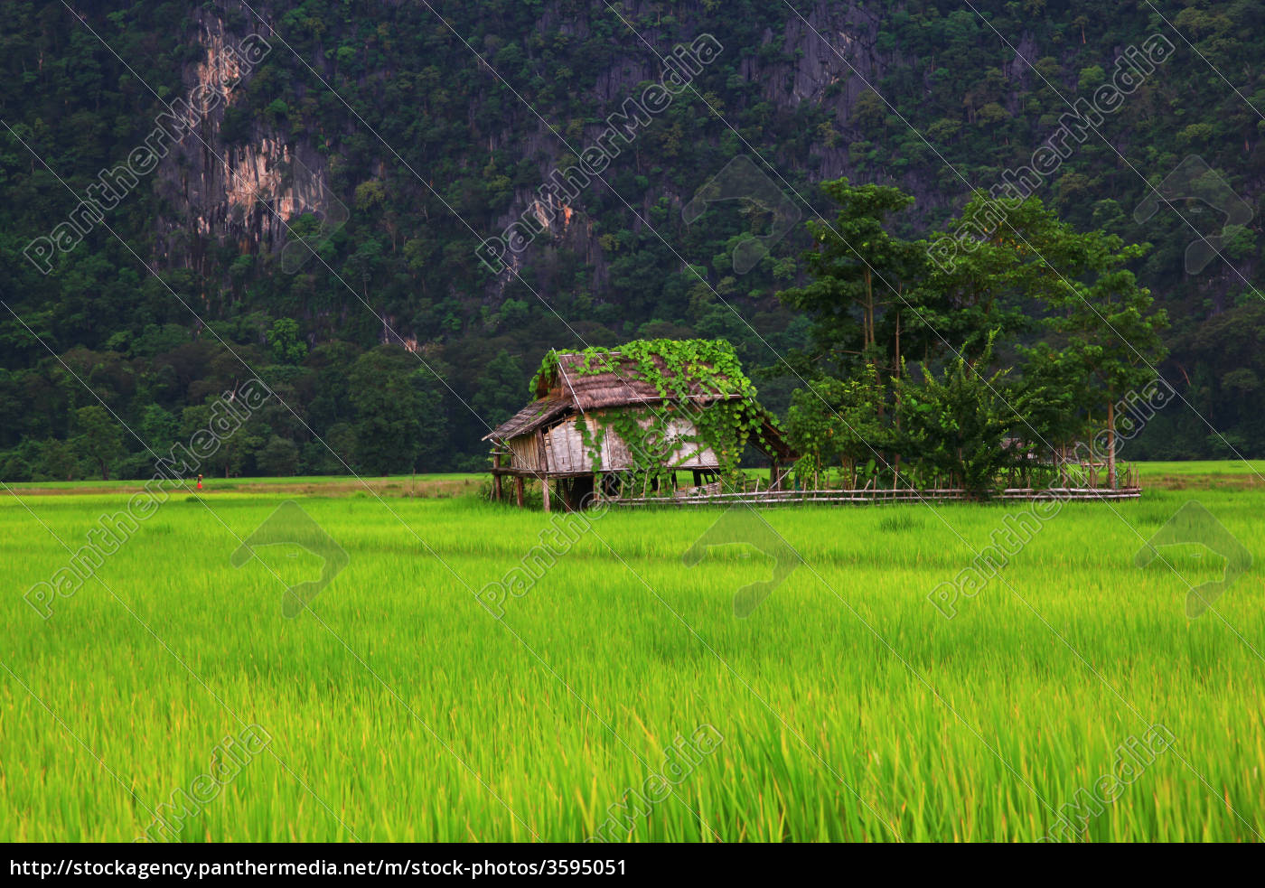 farmhouse, in, laos - 3595051