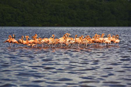 flock of ria de celestun birds