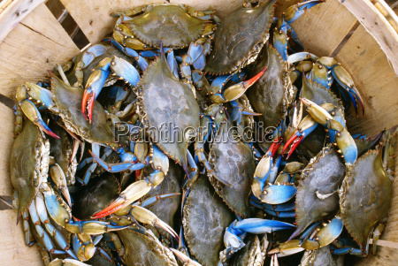 high angle view of crabs in
