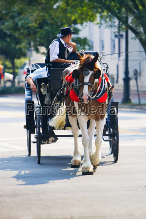 man riding a horse cart savannah