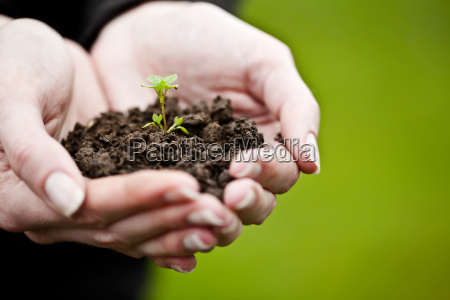 hand holding a fresh young plant
