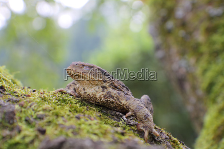 close up frog toad bufo bufo