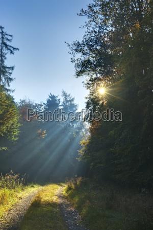 erholungwaldwegherbstsonne