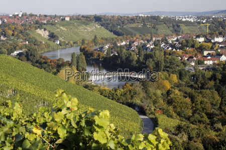 vineyards in bad cannstatt with neckar