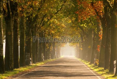 avenue in autumn avenue in