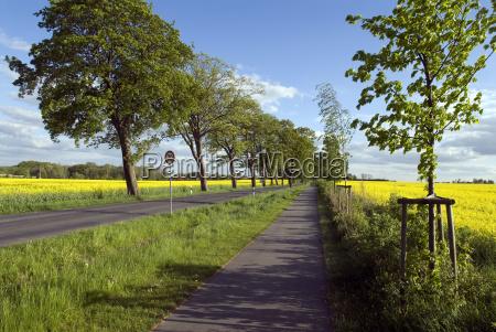 bike path through fields of rape