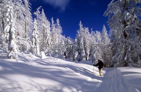 winter bavarian forest national park