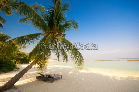 deckchair under palm trees on dream