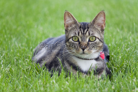 small rental cat in the grass